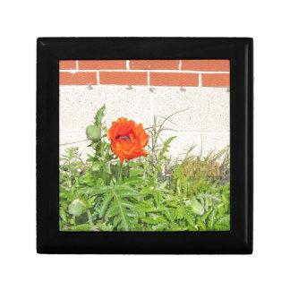 Red Carmen Poppy in Full Bloom Trinket Boxes