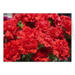 Red carnations card