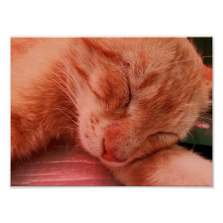 Red Cat Sleeping on Bench 4 Poster