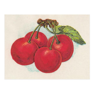Red Cherries Postcard