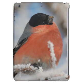 Red Chested Bird in Frosted Tree