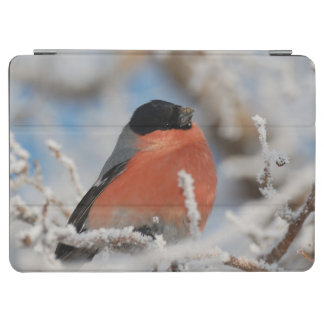 Red Chested Bird in Frosted Tree iPad Air Cover