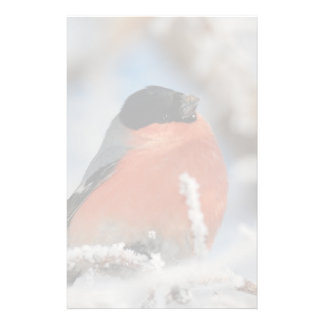 Red Chested Bird in Frosted Tree Stationery
