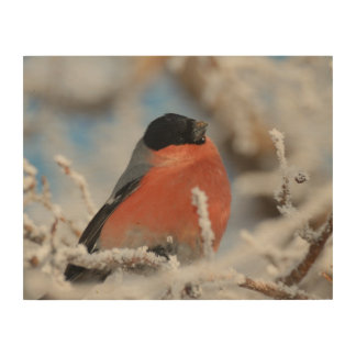 Red Chested Bird in Frosted Tree Wood Print