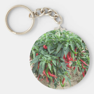 Red chili peppers hanging on the plant basic round button key ring