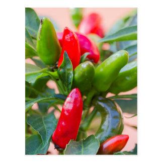 red chili postcard