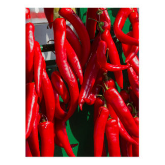 red chili postcard