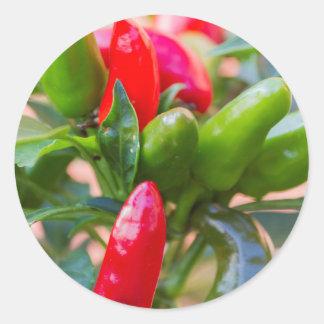 red chili round sticker
