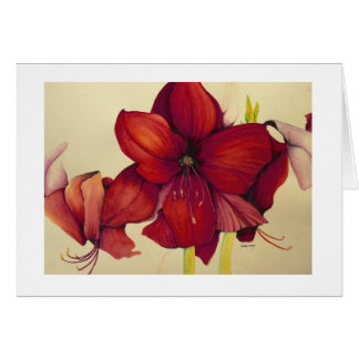 Red Christmas Amaryllis Painting White Border Card