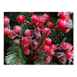 Red Christmas Berries. Postcard
