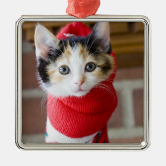 Red Christmas Kitten Christmas Ornament