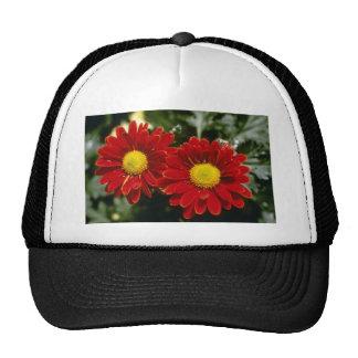 Red Chrysanthemum 'Firepower' (Florist Chrysanthem Hats