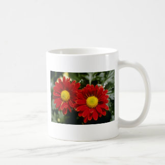 Red Chrysanthemum 'Firepower' (Florist Chrysanthem Mug