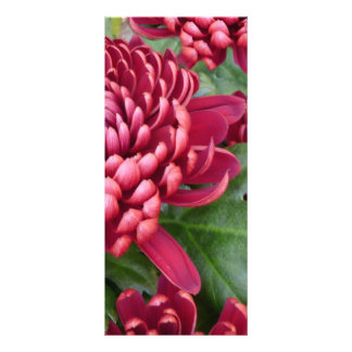 Red Chrysanthemums Full Color Rack Card
