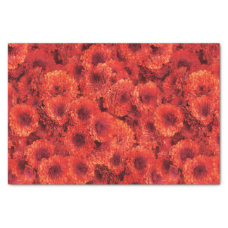 Red Chrysanthemums Tissue Paper
