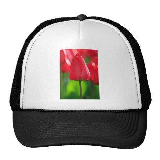 Red Closed Tulip Trucker Hats