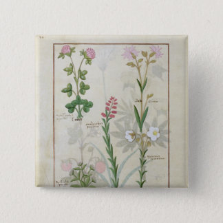Red clover & Aube Bellidis Onobrychis & Hyssopus 15 Cm Square Badge