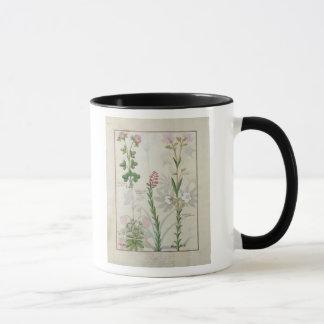 Red clover & Aube Bellidis Onobrychis & Hyssopus Mug
