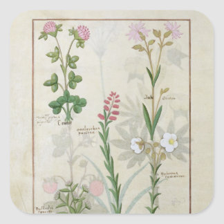 Red clover & Aube Bellidis Onobrychis & Hyssopus Square Sticker