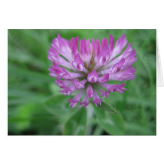 Red clover flower card