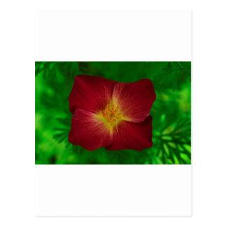 Red Cosmos Flower Design Postcard