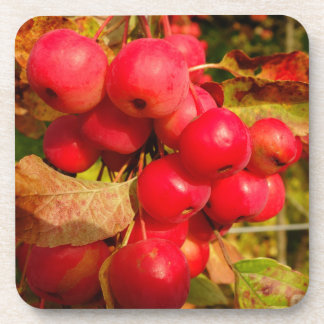 Red Crab Apples Coaster