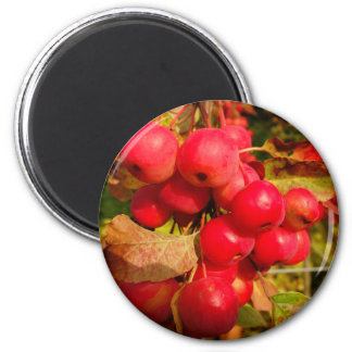 Red Crab Apples Magnet