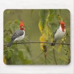 Red-Crested Cardinal Pair, Paroaria coronata, Mousemat