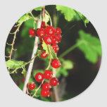 red currant classic round sticker
