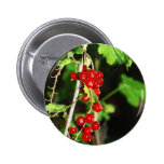 red currant pinback buttons