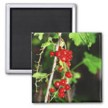red currant refrigerator magnets