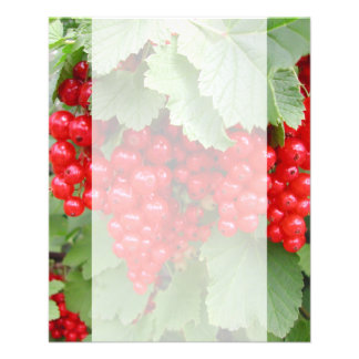Red Currants on the Plant. Green Leaves. Flyer