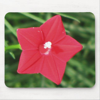 Red Cypress Vine Mousepads