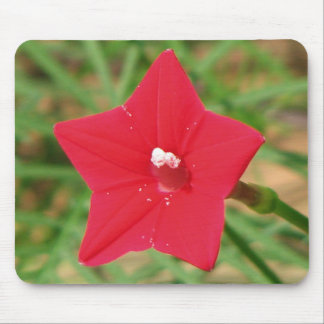 Red Cypress Vine Mousepad
