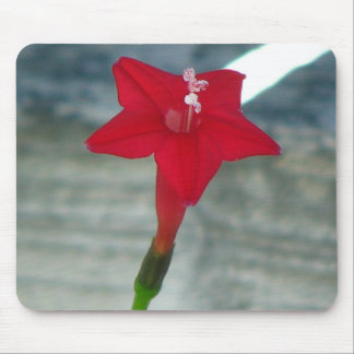 Red Cypress Vine Mouse Pad
