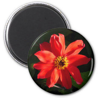 Red Dahlia (Bishop of Llandaff) 6 Cm Round Magnet
