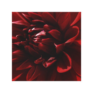 """Red Dahlia"" Canvas Prints"