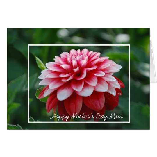 Red Dahlia Mother's Day Mum Card
