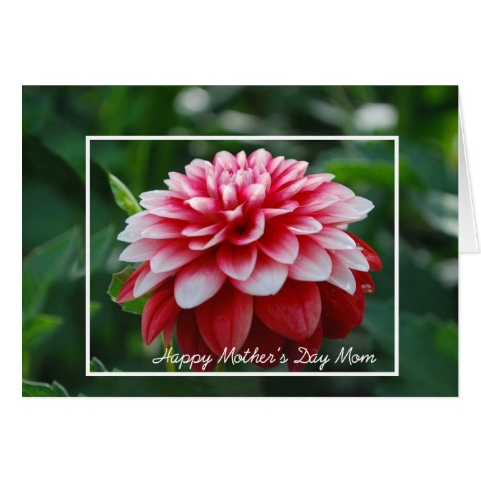 Red Dahlia Mother's Day Mum Greeting Card