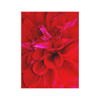 Red Dahlia petals Gallery Wrapped Canvas