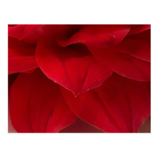 Red Dahlia Petals Photography Postcard