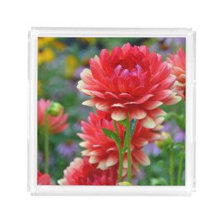 Red dahlias acrylic tray