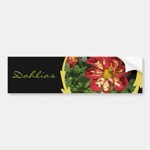 Red Dahlias Bumper Stickers
