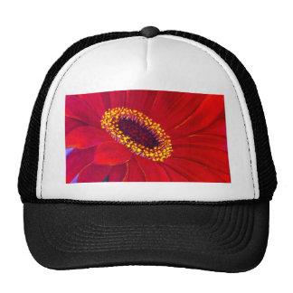 Red Daisy Gerber Flower Painting Art - Multi Hat