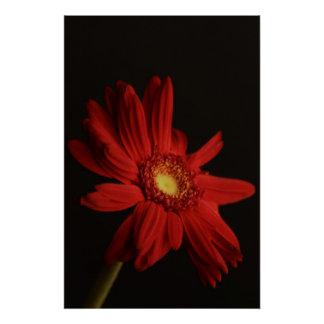 Red Daisy {Macro} Poster