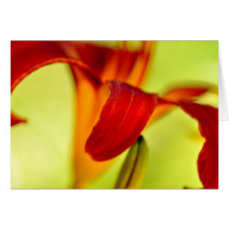 Red Day lily Note Card
