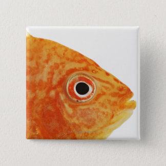 Red Deacon fish 15 Cm Square Badge