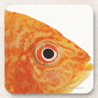 Red Deacon fish Beverage Coaster