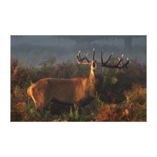 Red Deer at Dawn Wrapped Canvas