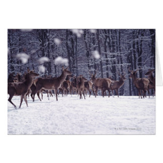 red deer card